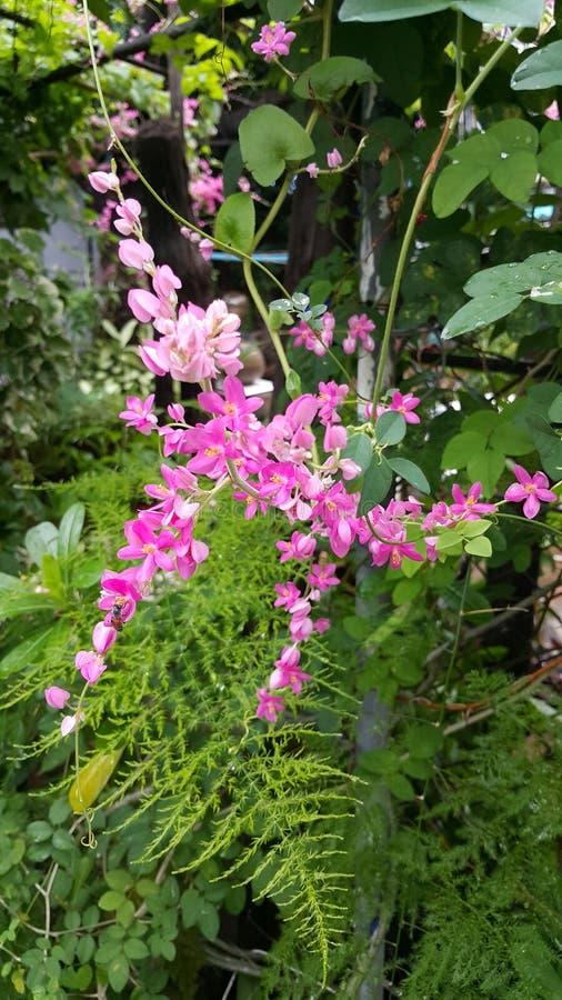 Ροζ λουλουδιών Blunch στοκ φωτογραφία με δικαίωμα ελεύθερης χρήσης