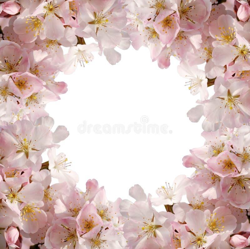 ροζ πλαισίων ανθών στοκ εικόνα με δικαίωμα ελεύθερης χρήσης