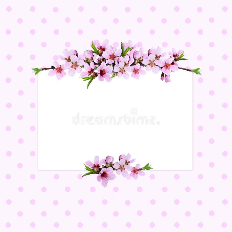Ροζ ρυθμίσεις γραμμών κλαδίσκων ροδάκινων και μια κάρτα διανυσματική απεικόνιση