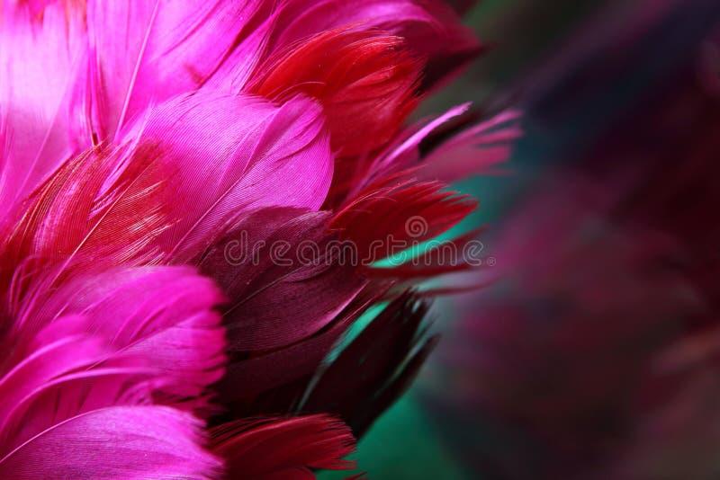ροζ φτερών στοκ εικόνες