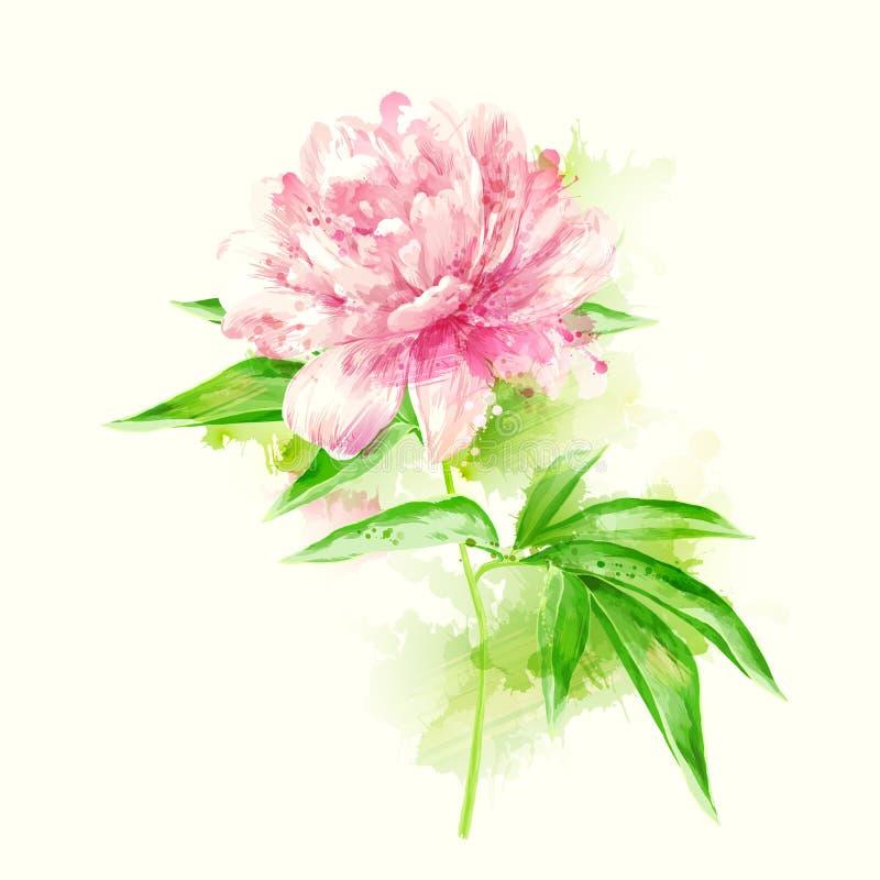 Ροζ peony με τους λεκέδες διανυσματική απεικόνιση