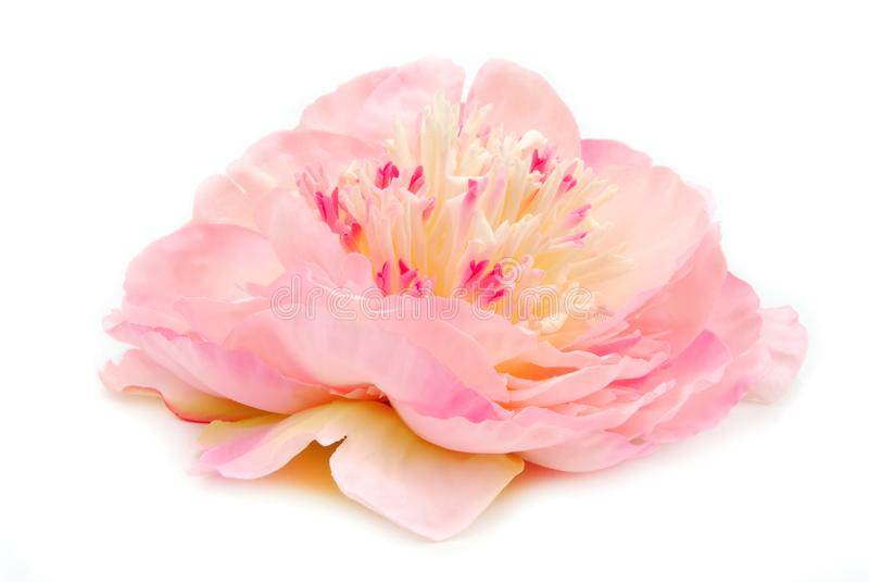 Ροζ Peony που απομονώνεται στο λευκό στοκ εικόνα με δικαίωμα ελεύθερης χρήσης