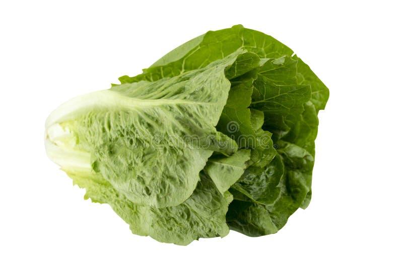 Ρομάν Lettuce στοκ φωτογραφία με δικαίωμα ελεύθερης χρήσης