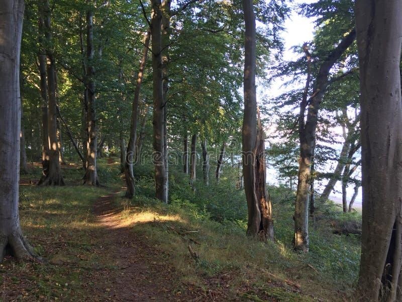 Ρομαντικό δάσος θαλασσίως στοκ φωτογραφία με δικαίωμα ελεύθερης χρήσης