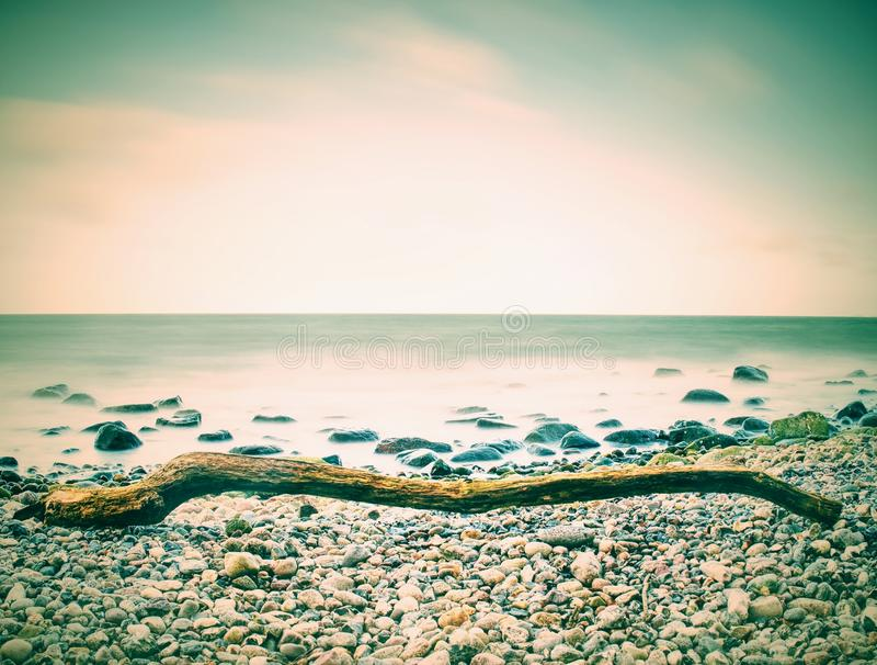 Ρομαντικό ηλιοβασίλεμα εν πλω Η πετρώδης παραλία με το δέντρο βαλτική Εσθονία κοντά στη θάλασσα somethere Ταλίν στοκ φωτογραφία με δικαίωμα ελεύθερης χρήσης