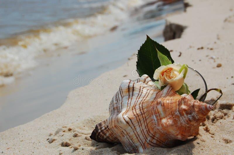 ρομαντικό θαλασσινό κοχύλι στοκ εικόνες