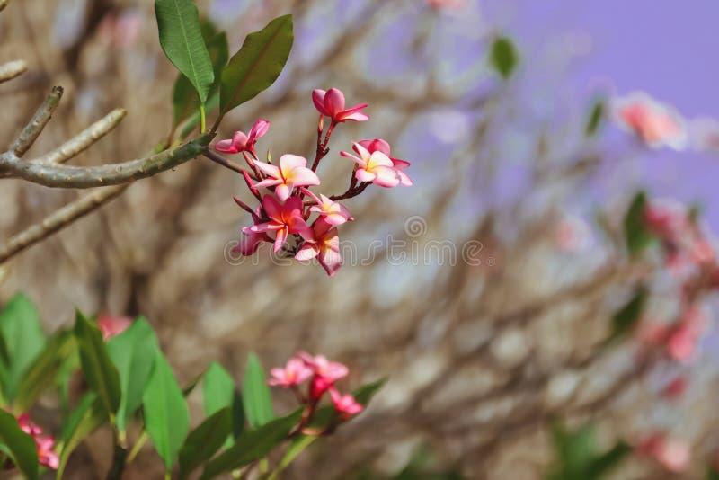 Ρομαντικό ρόδινο λουλούδι στοκ εικόνα
