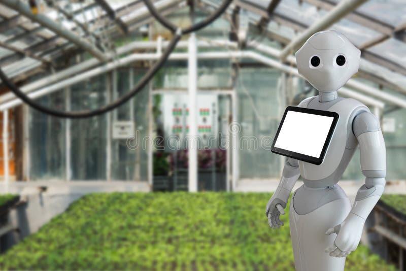 Ρομπότ σε ένα θερμοκήπιο στοκ εικόνα με δικαίωμα ελεύθερης χρήσης