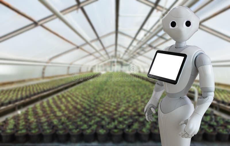 Ρομπότ σε ένα θερμοκήπιο στοκ εικόνα