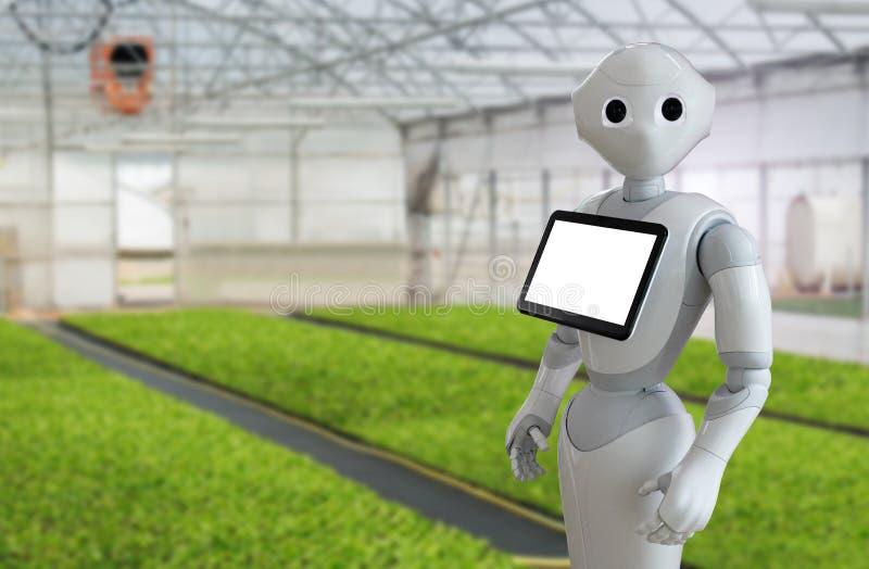 Ρομπότ σε ένα θερμοκήπιο στοκ εικόνες