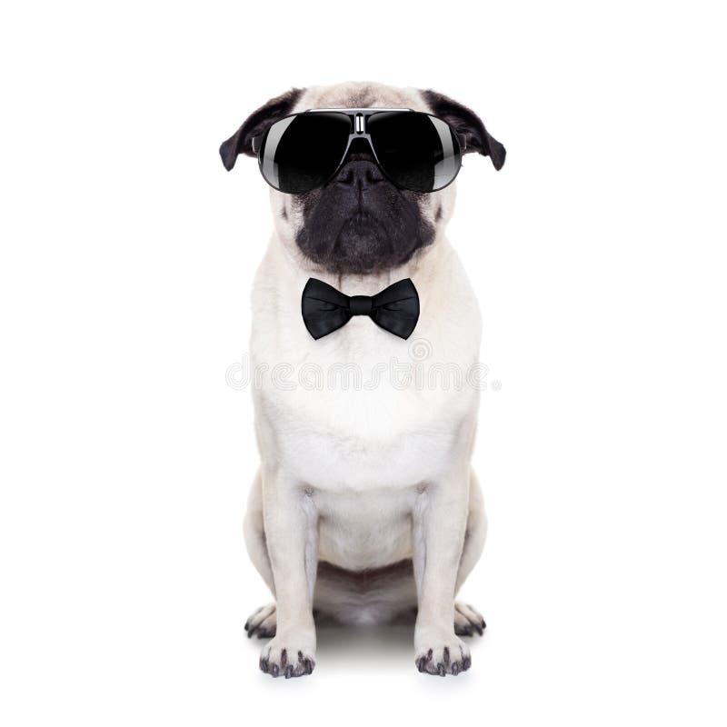 δροσερό σκυλί στοκ εικόνα με δικαίωμα ελεύθερης χρήσης