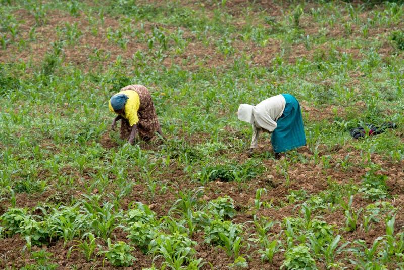 Ρουάντα στοκ εικόνες