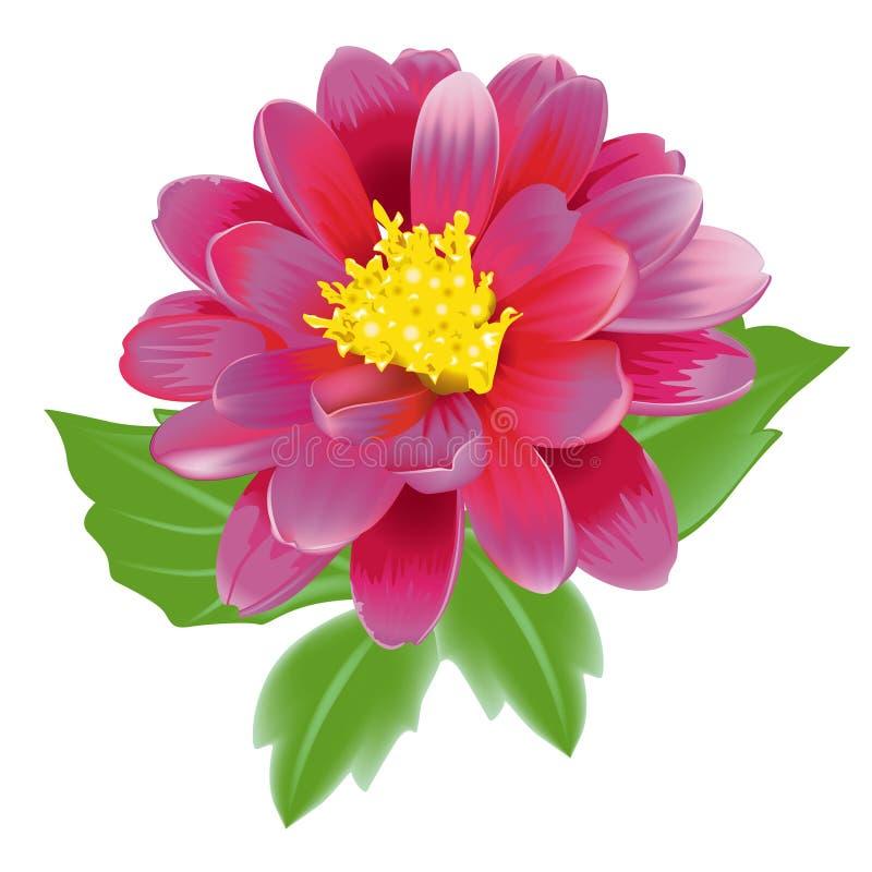 ρουμπίνι λουλουδιών ελεύθερη απεικόνιση δικαιώματος