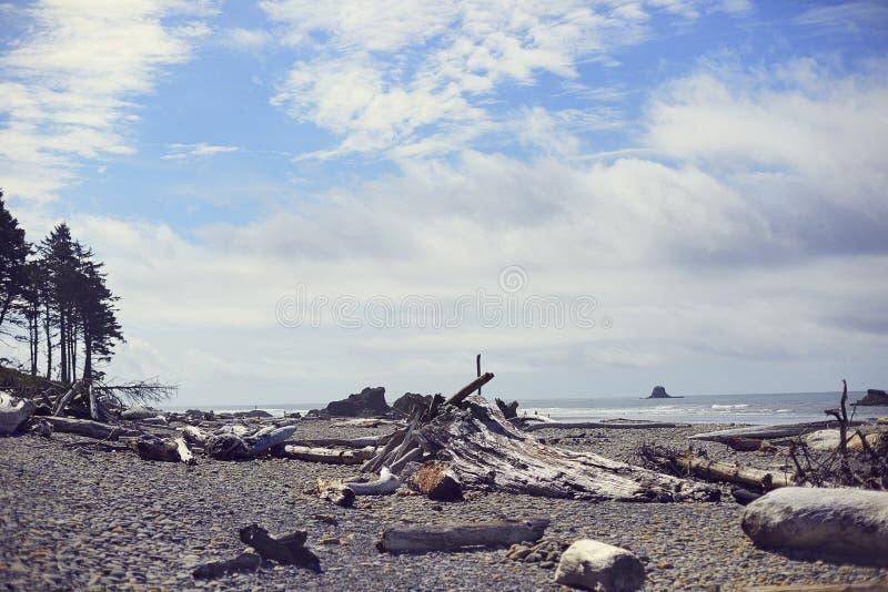 Ροδοκόκκινη παραλία Driftwood, Ουάσιγκτον στοκ φωτογραφίες