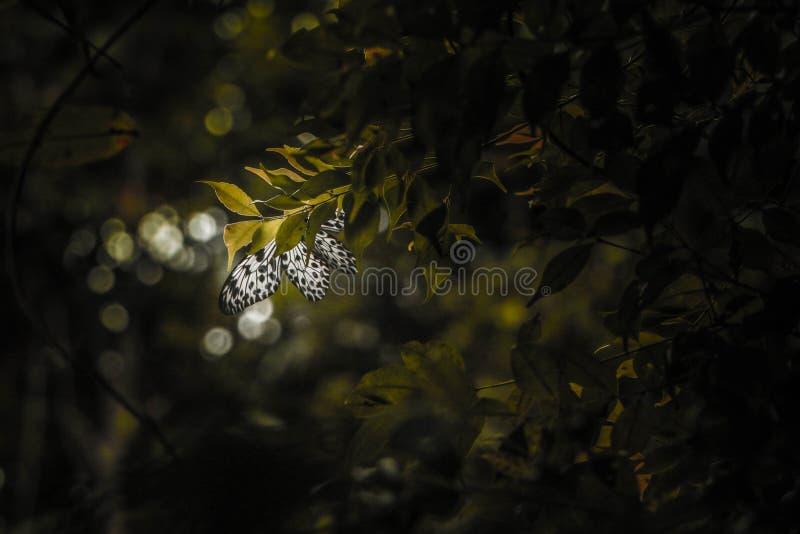 ρωμαϊκές ρομαντικές οδοί εικόνων πεταλούδων στοκ φωτογραφίες με δικαίωμα ελεύθερης χρήσης