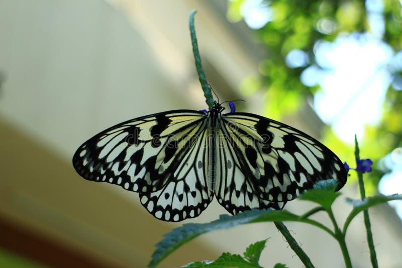 ρωμαϊκές ρομαντικές οδοί εικόνων πεταλούδων στοκ φωτογραφία