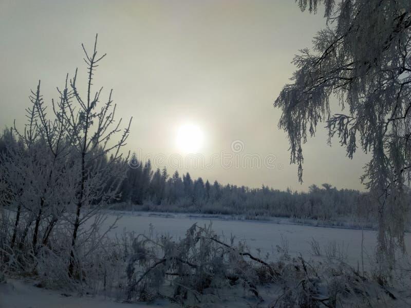 Ρωσία, κρύο χειμερινό βράδυ σε μια αλέα σημύδων στοκ εικόνα