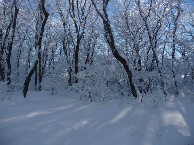 Ρωσία Χιονώδες χειμερινό δάσος στο Stavropol ` Taman δασικό Dacha ` στοκ εικόνες
