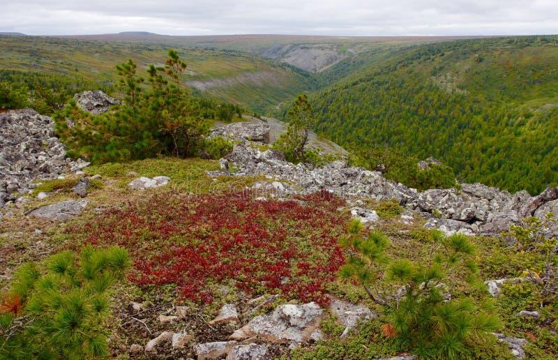 Ρωσική φύση στοκ φωτογραφίες