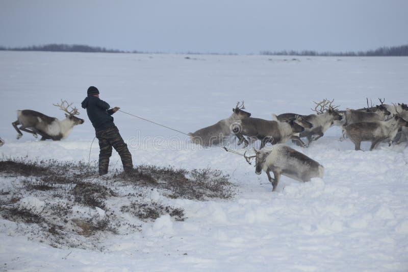 Ρωσικός αρκτικός αυτόχθων! στοκ εικόνες με δικαίωμα ελεύθερης χρήσης