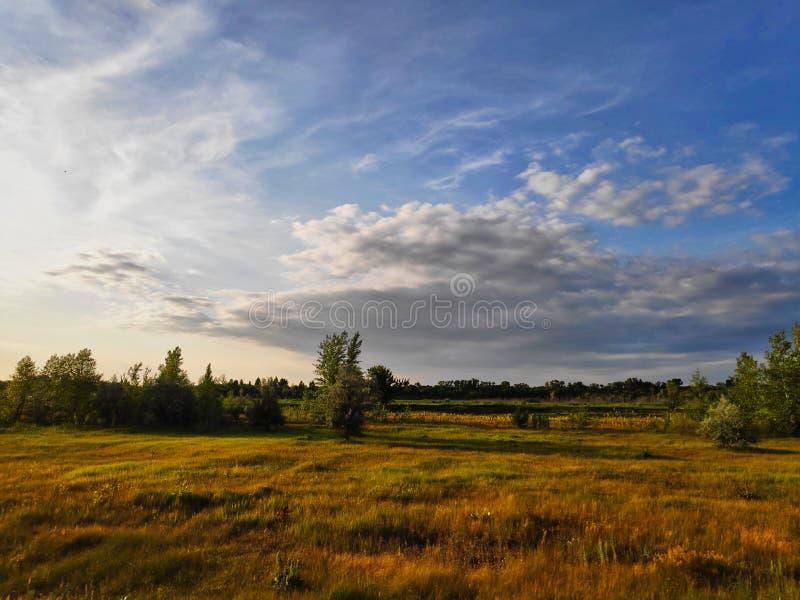 Ρωσικός τομέας τοπίων φωτογραφίας στο ηλιοβασίλεμα μιας θερινής ημέρας με τη μαραμένα χλόη και τα δέντρα στο υπόβαθρο και έναν μπ στοκ εικόνα με δικαίωμα ελεύθερης χρήσης