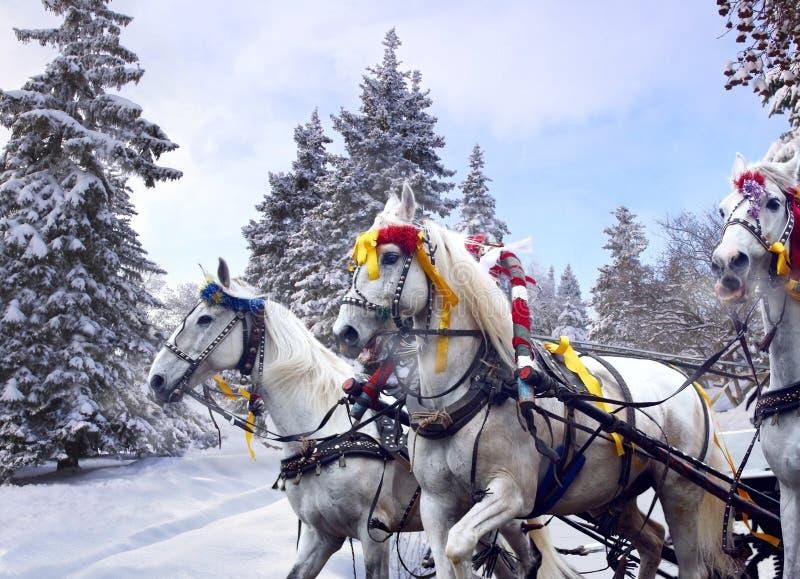 Ρωσικός χειμώνας τρία άλογα στοκ εικόνες