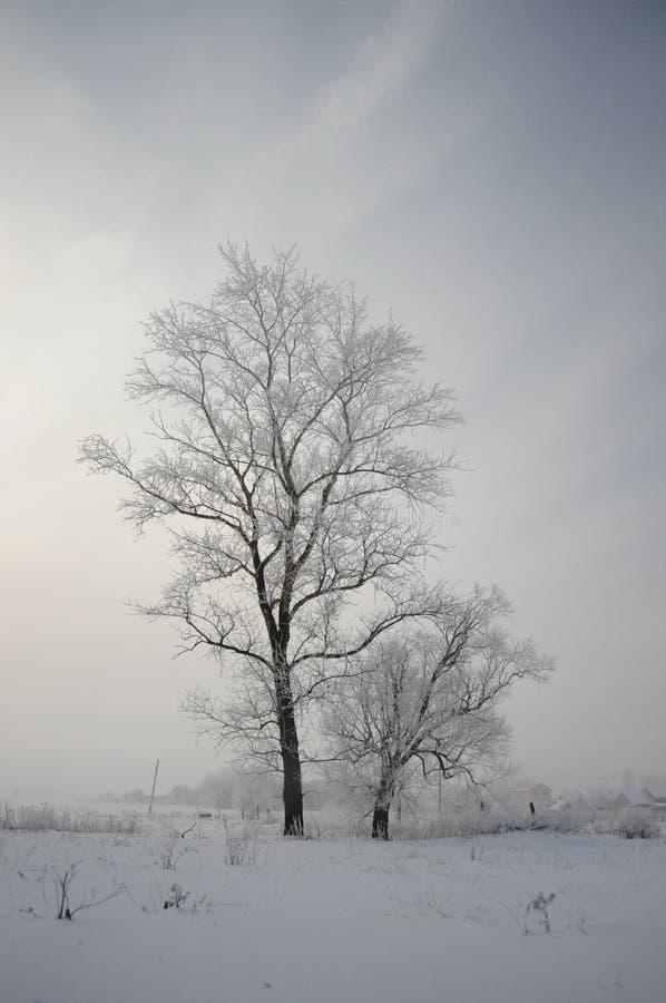 Ρωσικός χειμώνας 4 στοκ φωτογραφία