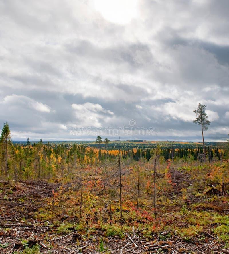 ρωσικό taiga στοκ εικόνες με δικαίωμα ελεύθερης χρήσης