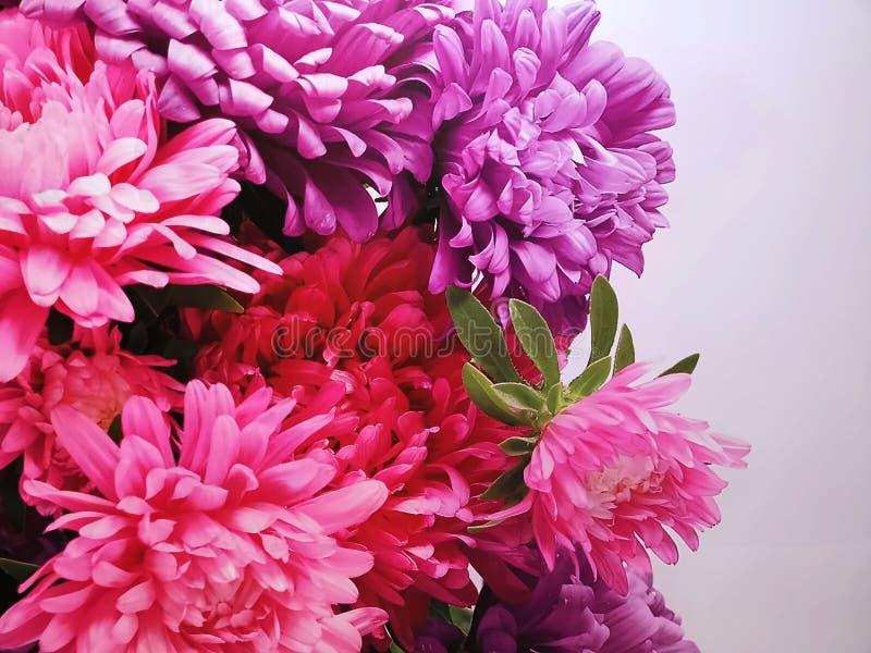 Ρόδινα και πορφυρά τεχνητά λουλούδια στο άσπρο υπόβαθρο στοκ εικόνα με δικαίωμα ελεύθερης χρήσης