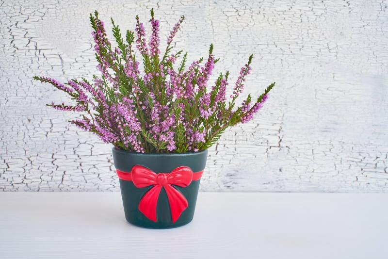 Ρόδινα λουλούδια ερείκης calluna vulgaris ή κοινά στο δοχείο λουλουδιών Γ στοκ φωτογραφία