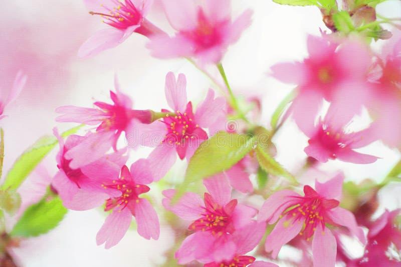Ρόδινα λουλούδια κερασιών με τα νέα πράσινα φύλλα στοκ εικόνες