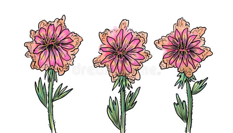 Ρόδινα λουλούδια των τριχωτών μίσχων διανυσματική απεικόνιση