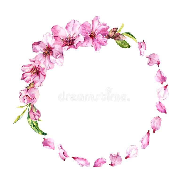 Ρόδινα πέταλα κερασιών, άνθος sakura, λουλούδια κερασιών άνοιξη Floral στεφάνι Watercolor γύρω από τα σύνορα διανυσματική απεικόνιση