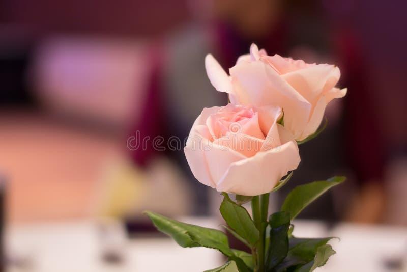 Ρόδινα τριαντάφυλλα για να διακοσμήσει τον πίνακα για το γεύμα στοκ εικόνες