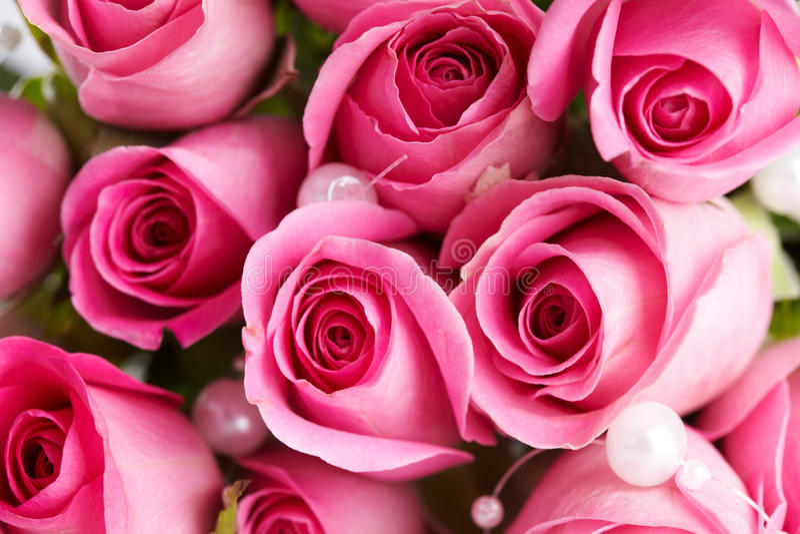 ρόδινα τριαντάφυλλα λεπτ&o στοκ εικόνα