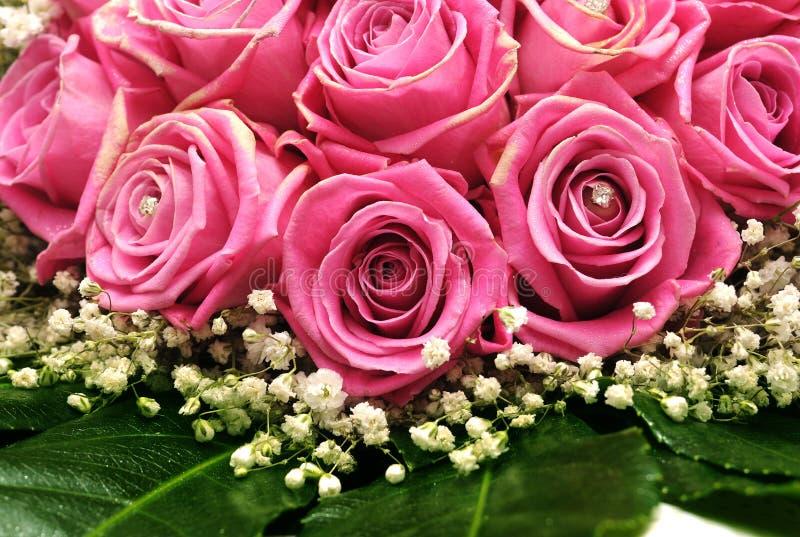 Ρόδινα τριαντάφυλλα με τις χάντρες στοκ εικόνα