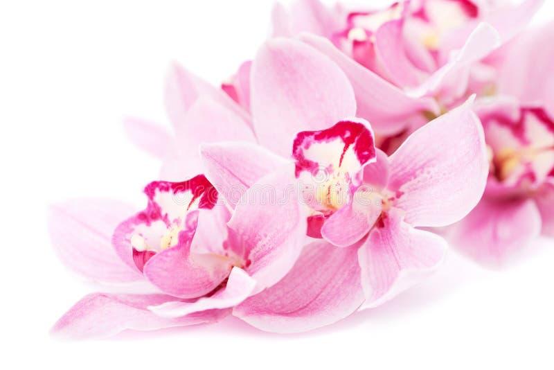 Ρόδινα orchid λουλούδια   στοκ φωτογραφία