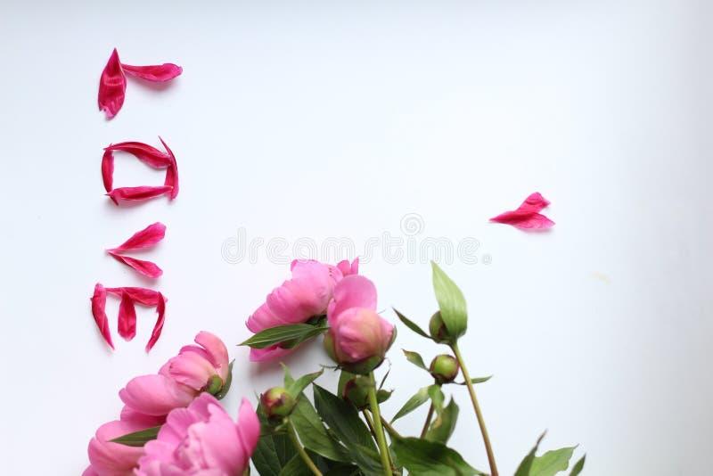 Ρόδινα peonies λουλουδιών σε ένα άσπρο υπόβαθρο και αγάπη πετάλων, αγάπη του Word φιαγμένη από πέταλα στοκ φωτογραφίες