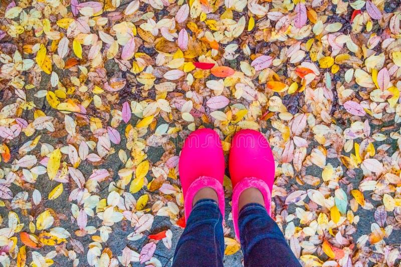 Ρόδινες λαστιχένιες μπότες με τα κίτρινα πεσμένα φύλλα Δάσος φθινοπώρου, σκηνή πτώσης Τοπ άποψη με Copyspace θηλυκά παπούτσια και στοκ εικόνες
