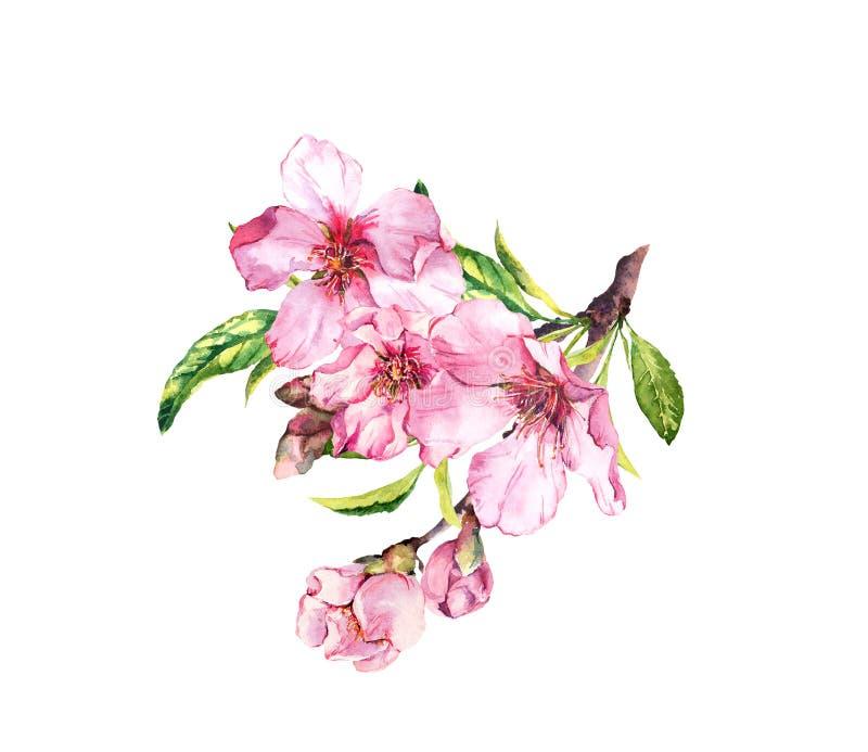 ρόδινη άνοιξη λουλουδιών Άνθος κερασιών, αμύγδαλο, μήλο, sakura watercolor διανυσματική απεικόνιση
