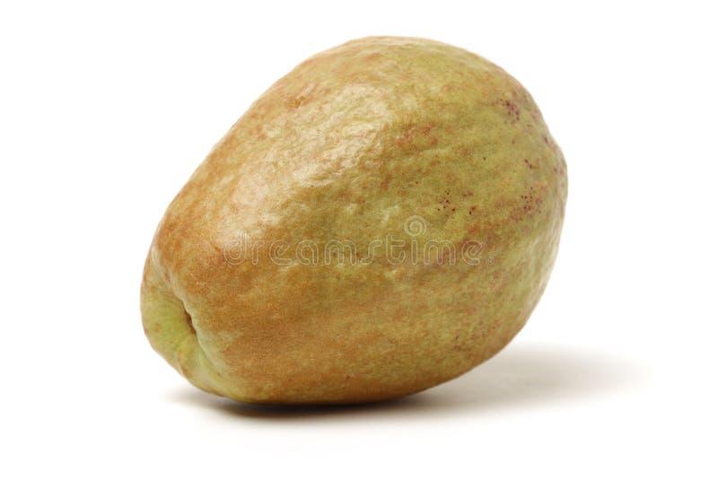 Ρόδινη γκοϋάβα στοκ φωτογραφία με δικαίωμα ελεύθερης χρήσης