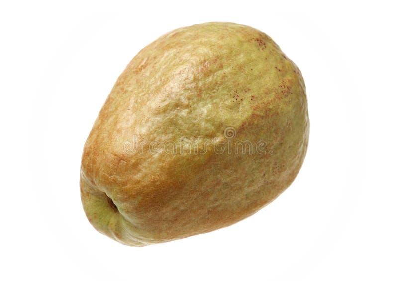 Ρόδινη γκοϋάβα στοκ φωτογραφίες