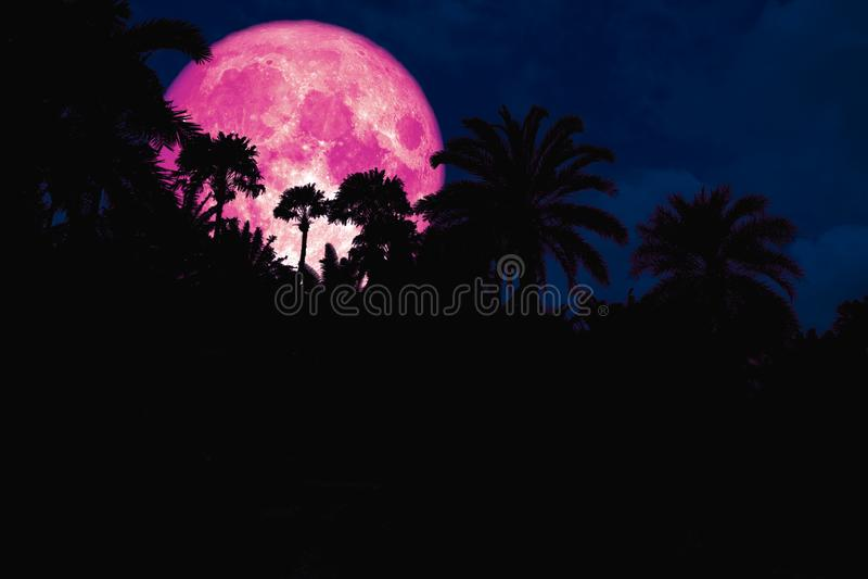 ρόδινη πίσω σκιαγραφία φεγγαριών στον αρχαίο νυχτερινό ουρανό φοινικών στοκ εικόνα