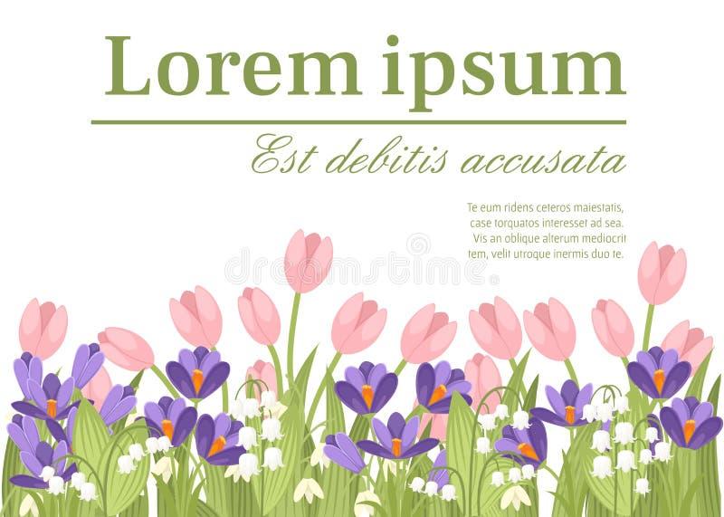 Ρόδινη τουλίπα άνοιξη, πορφυρός κρόκος και άσπρα majalis Convallaria Πράσινο σχέδιο λουλουδιών, χλόη Έννοια για την κάρτα χαιρετι απεικόνιση αποθεμάτων