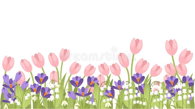 Ρόδινη τουλίπα άνοιξη, πορφυρός κρόκος και άσπρα majalis Convallaria Πράσινο σχέδιο λουλουδιών, χλόη Έννοια για την κάρτα χαιρετι ελεύθερη απεικόνιση δικαιώματος