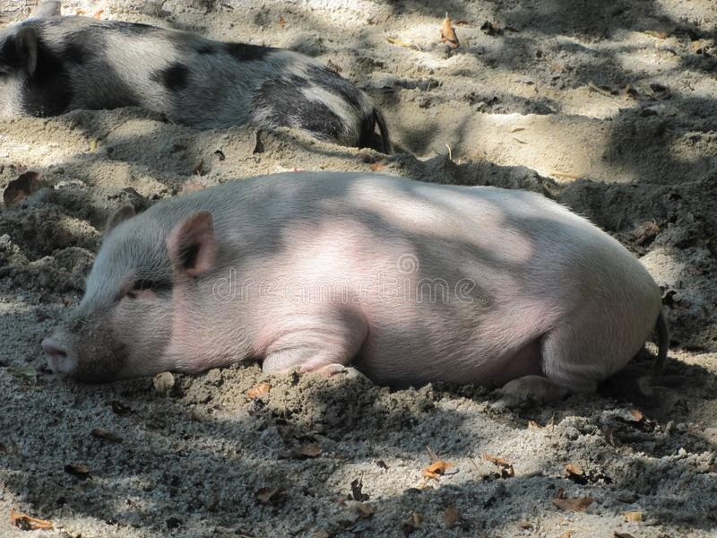 Ρόδινη piggy στήριξη στη σκιά στοκ εικόνα με δικαίωμα ελεύθερης χρήσης