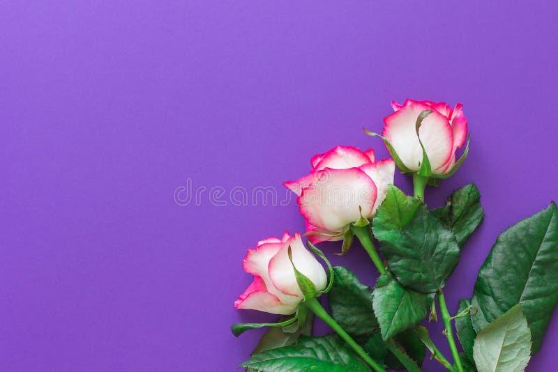 Ρόδινος αυξήθηκε λουλούδι σε μια ιώδη τοπ άποψη υποβάθρου οριζόντια στοκ φωτογραφίες