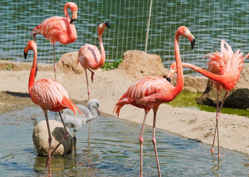 ρόδινος ζωολογικός κήπ&omicron στοκ εικόνες με δικαίωμα ελεύθερης χρήσης