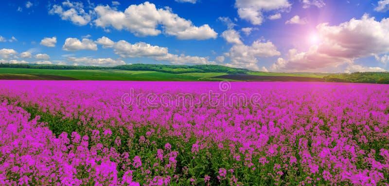 Ρόδινος πορφυρός τομέας, φαντασία φανταστικό τοπίο, σύννεφα στον ουρανό πέρα από το λιβάδι με τα ρόδινα λουλούδια στοκ φωτογραφίες