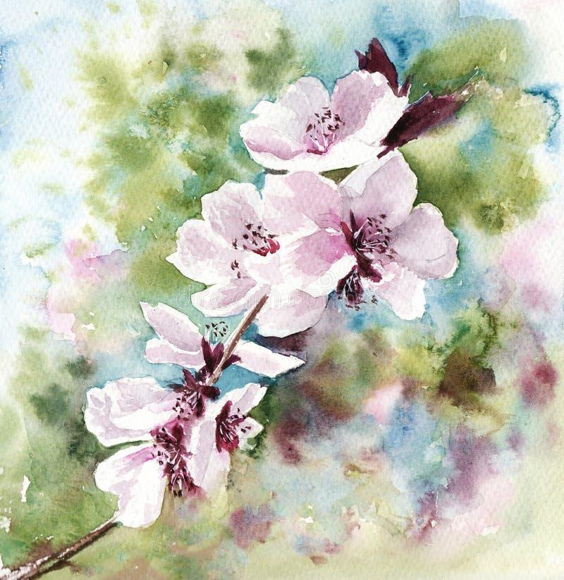 Ρόδινο ανθίζοντας άνθος κερασιών απεικόνισης Watercolor την άνοιξη διανυσματική απεικόνιση